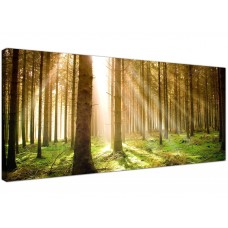 Prints of Forest Trees Wall Art